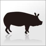 豚ブタのイラスト素材eps