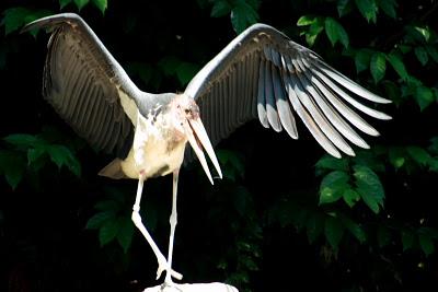 bird at Wetlands