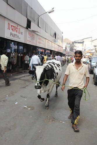 the cow is mans best friend by firoze shakir photographerno1