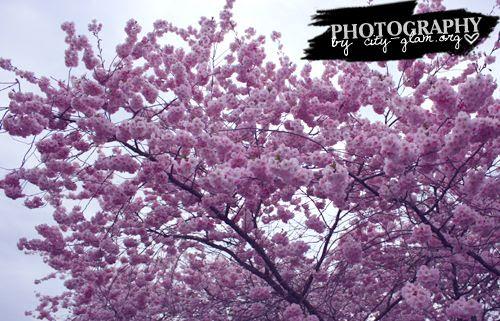 http://i402.photobucket.com/albums/pp103/Sushiina/dailykirsch3.jpg