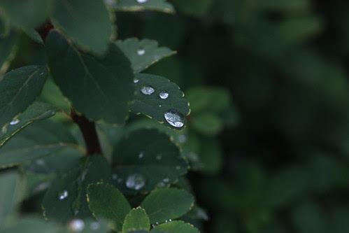 leaves&drops by cigo2009