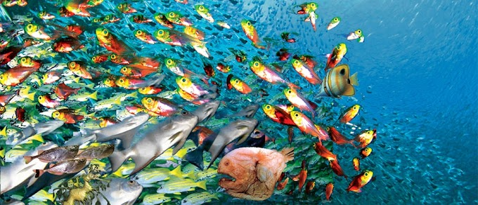 Do Fish Drink, How? Find Out.