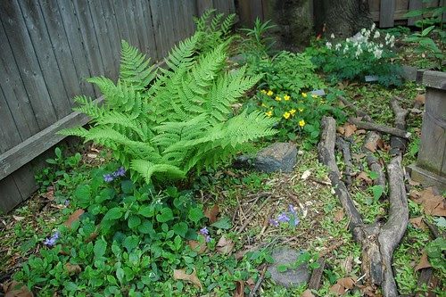 Part of the Native Plant Garden