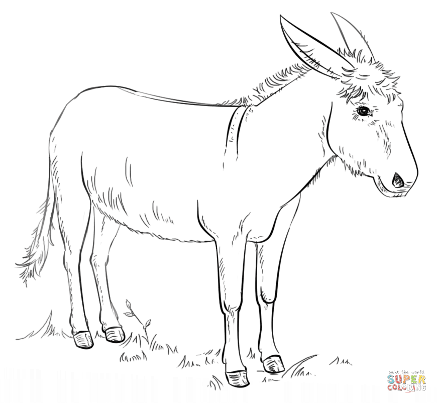 76 Coloring Pages Domestic Animals , Free HD Download