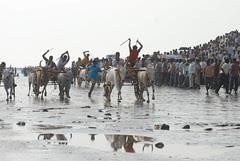 Jai Maharashtra Jai Ho Indians by firoze shakir photographerno1