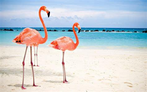 flamingo wallpaper desktop backgrounds
