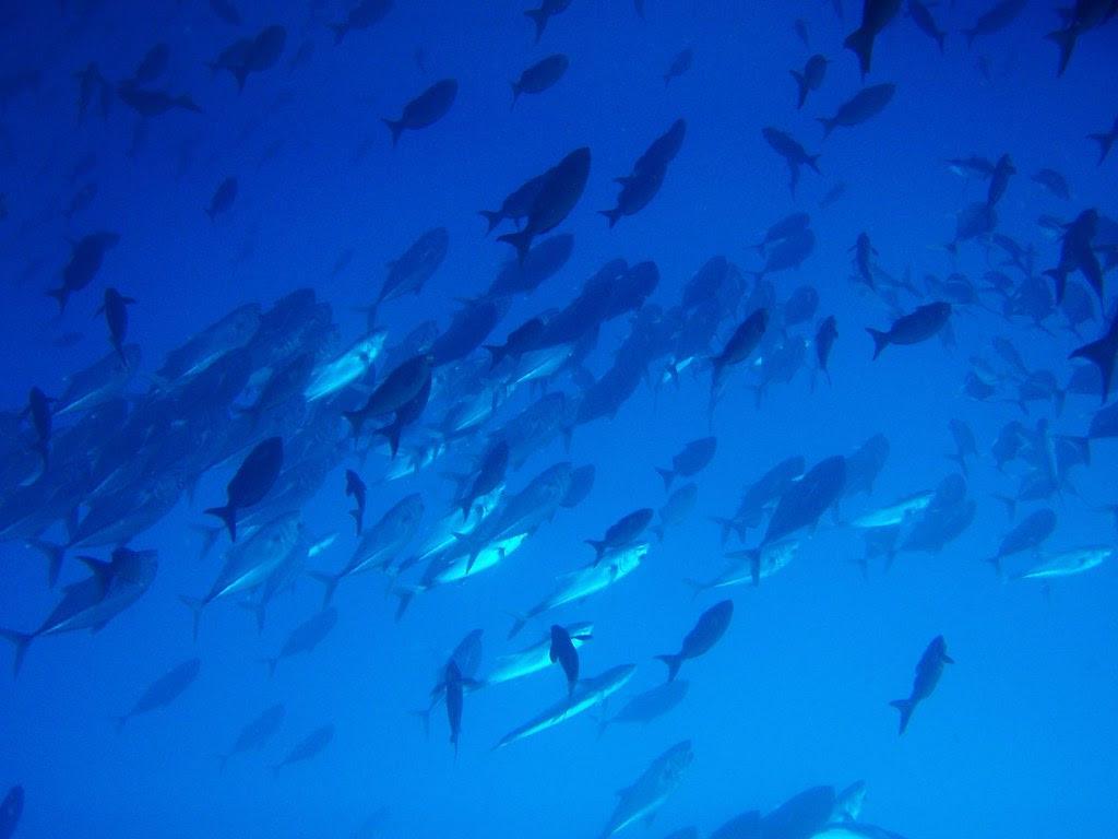 Defensa de Tesis en Ecología - Shifting Baselines en la pesca blanca de Galápagos: 9 mayo 12h00, Salón Azul USFQ