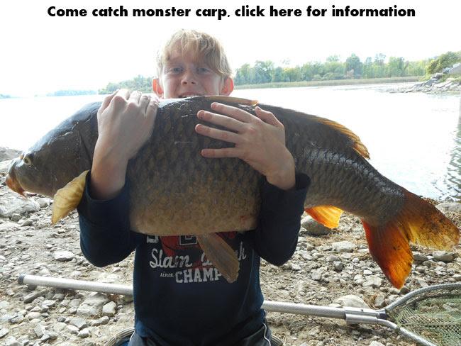 Montreal carp fishing guide