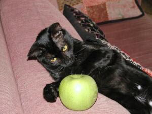 Shoosha with apple