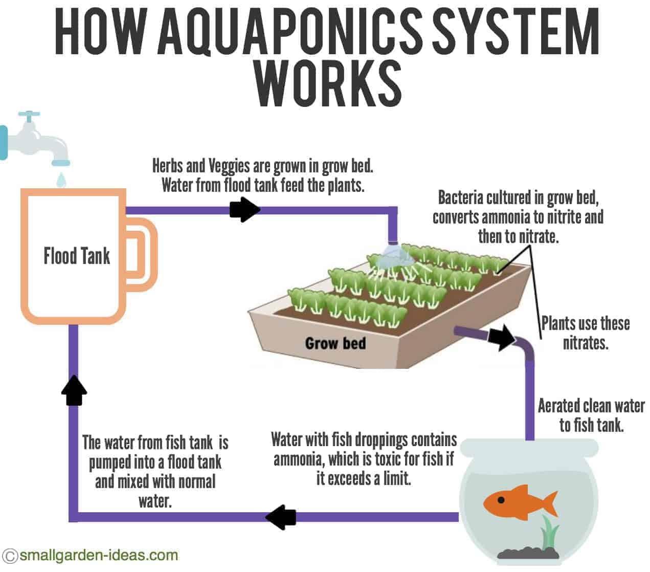 aquaponic system detail diagram 1