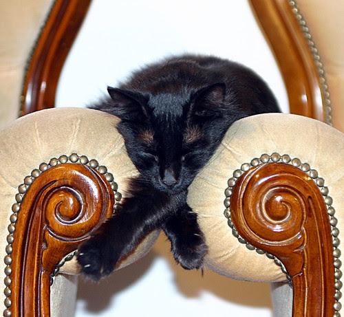 Sleeping between armchairs by Leonid Mamchenkov