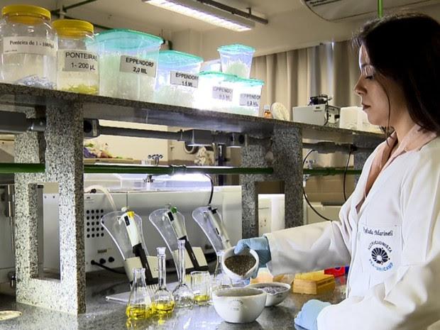 Pesquisadores recomendam uso regular da semnte ou do óleo na comida  (Foto: Reprodução EPTV)