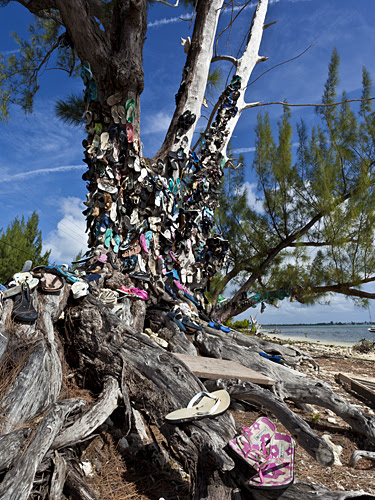 Shoe Tree by Michael Orhelein