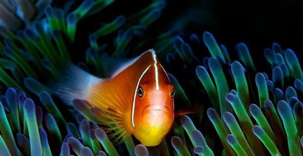 Τα τελευταία 40 χρόνια έχει εξαφανιστεί το 50% της θαλάσσιας ζωής