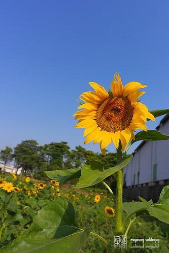 Samsung_NX200_16mm_intro_23