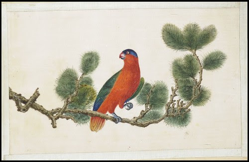 Bird Album h