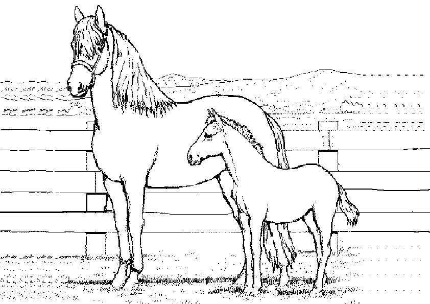 Ausmalbilder Kostenlos Pferde 10 | Ausmalbilder Kostenlos