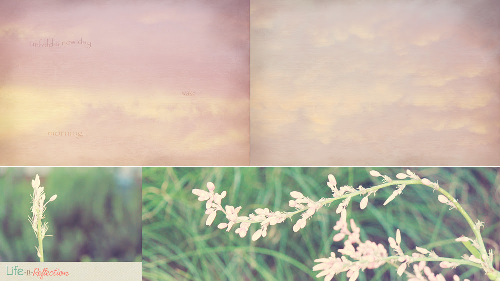 lavendar summer
