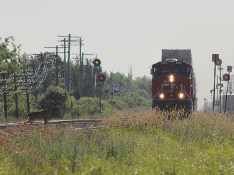 CN 2325 and deer in Winnipeg