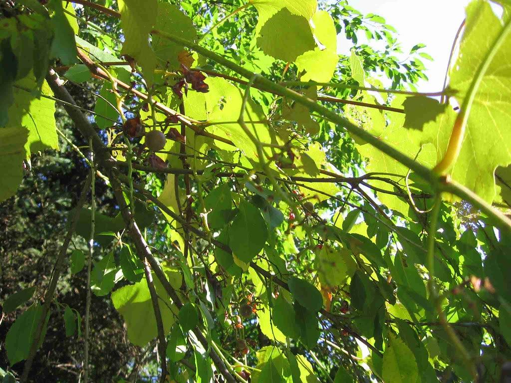 Photo 1 of no nice grapes