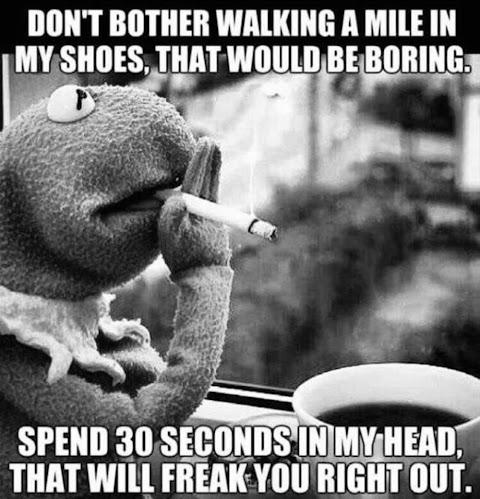 Funny Memes Kermit