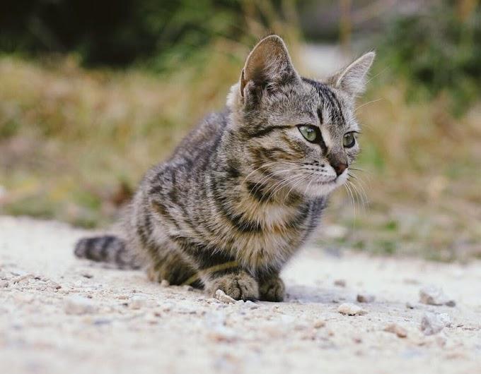 ¿Cómo elegir nuestra arena para gatos?