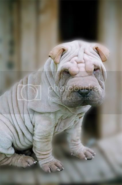 Puppy Pictures, Images and Photos