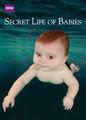 Secret Life of Babies | filmes-netflix.blogspot.com