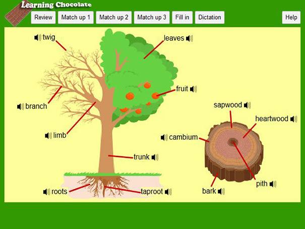 trees_copy