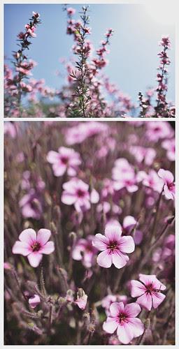 botanical garden_04