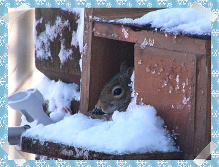 Momma squirrel relaxing in her box