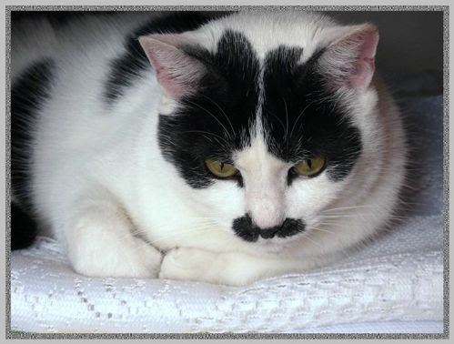moja kotka Kizia