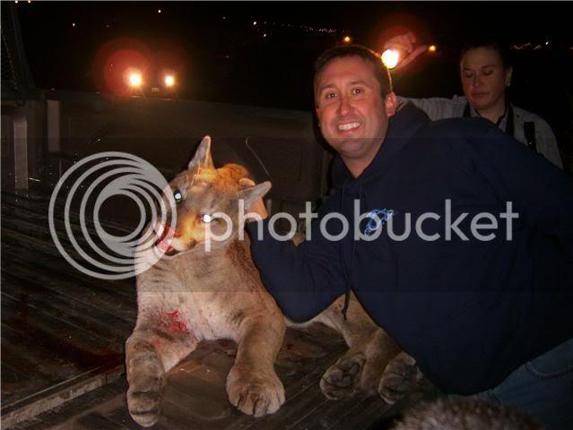 Mountain Lion2