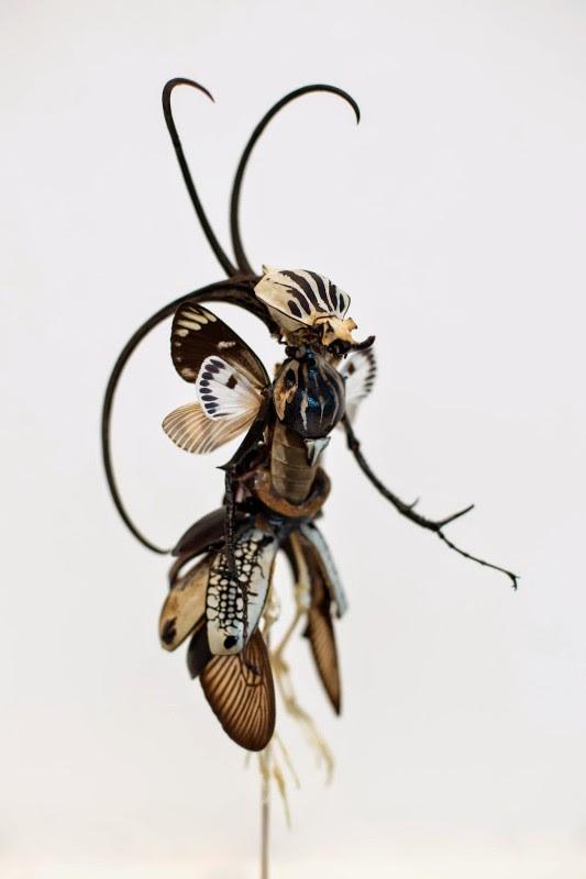 fee insecte graine morceau assemblage 06 533x800 Les fées de Cedric Laquieze