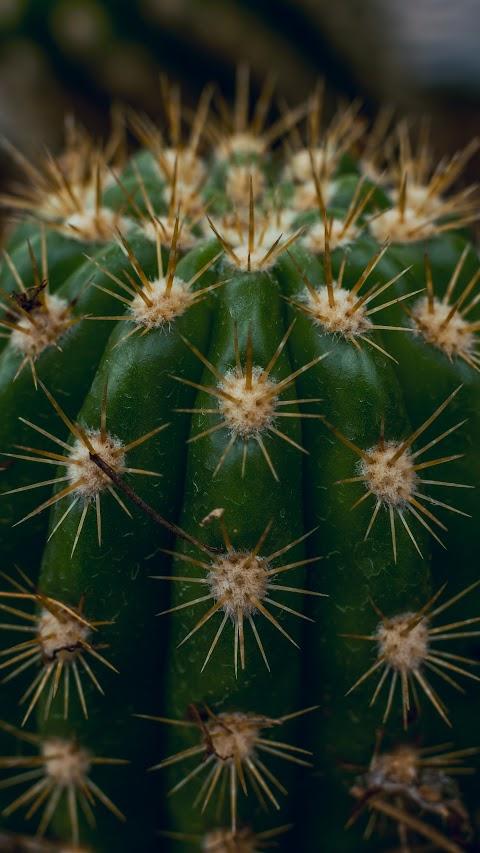 افضل خلفية نباتات بالعالم بدقة عالية خلفية صبار جميل hd
