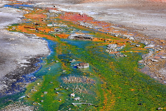 IMG_9142 Hot Spring Run-Off, Yellowstone National Park