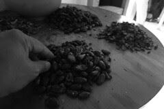 Guatemala - cocoa beans