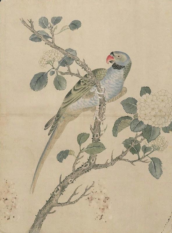 Ink + Watercolour  Bird sketch a