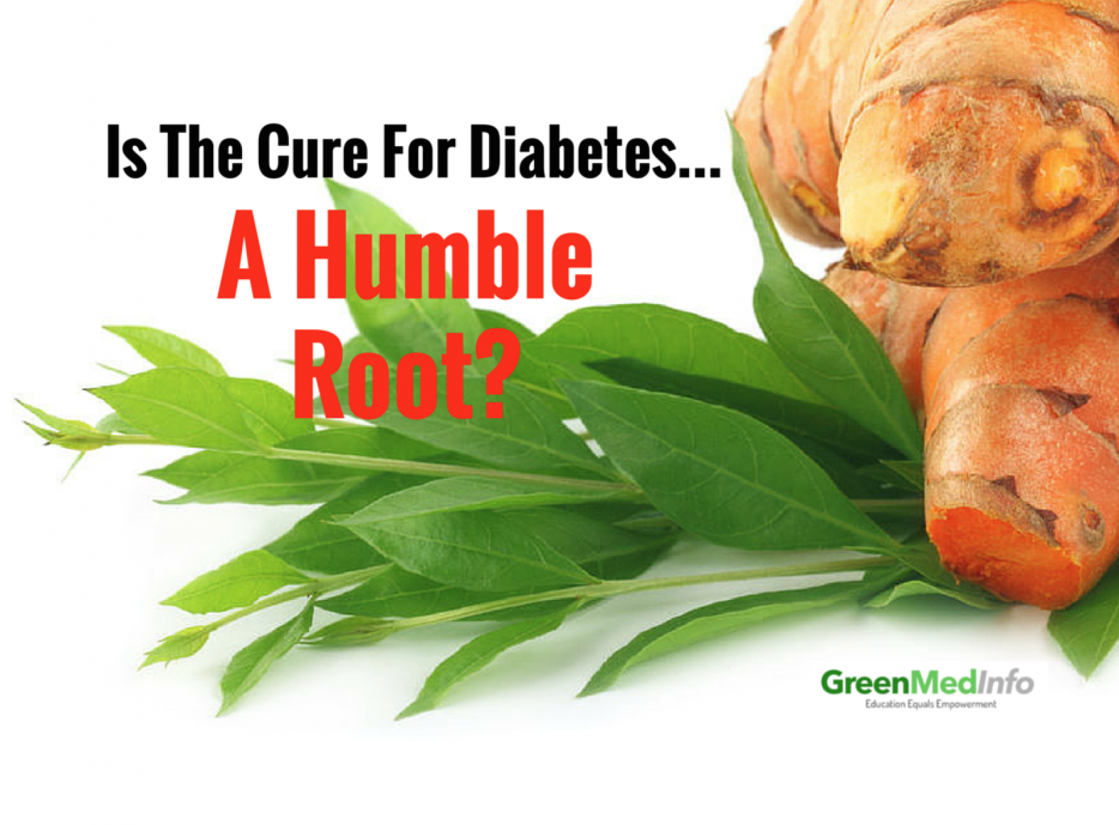 Is The Cure for Diabetes A Humble Root?