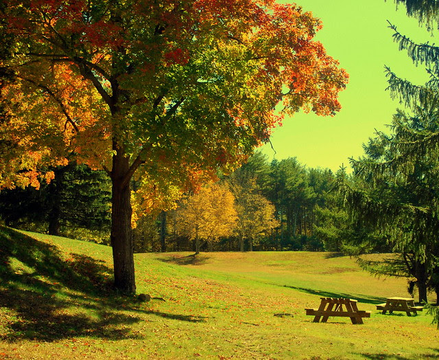 Arcadia - picnic table yellow tint