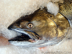 Dead Fish II