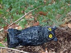 Owl Prone