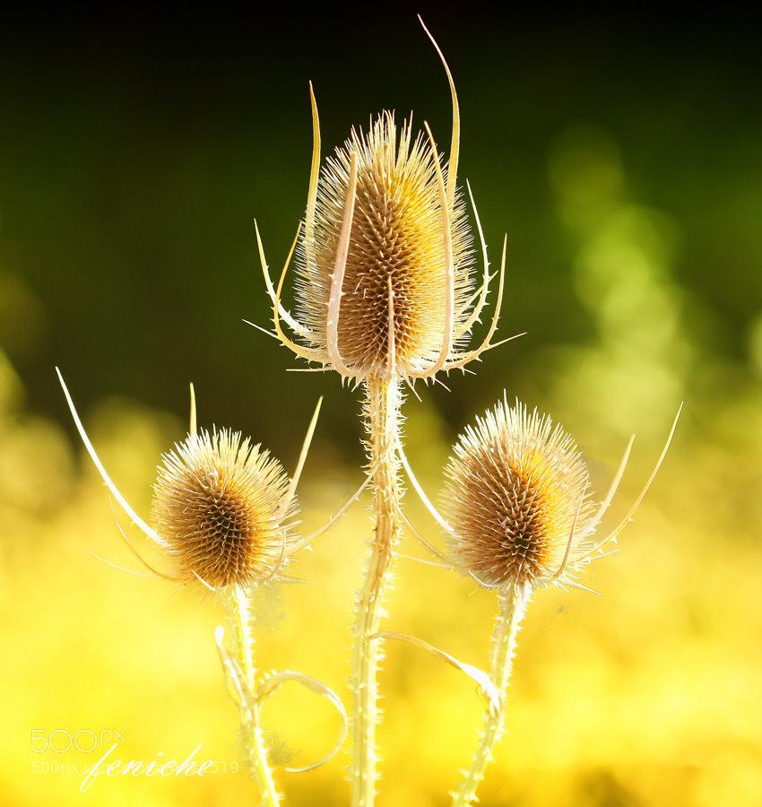 Фотография природы желтыми цветами Фениче Фернандо на 500px