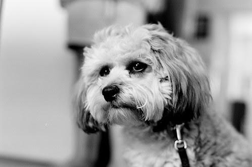 Contemplative puppy