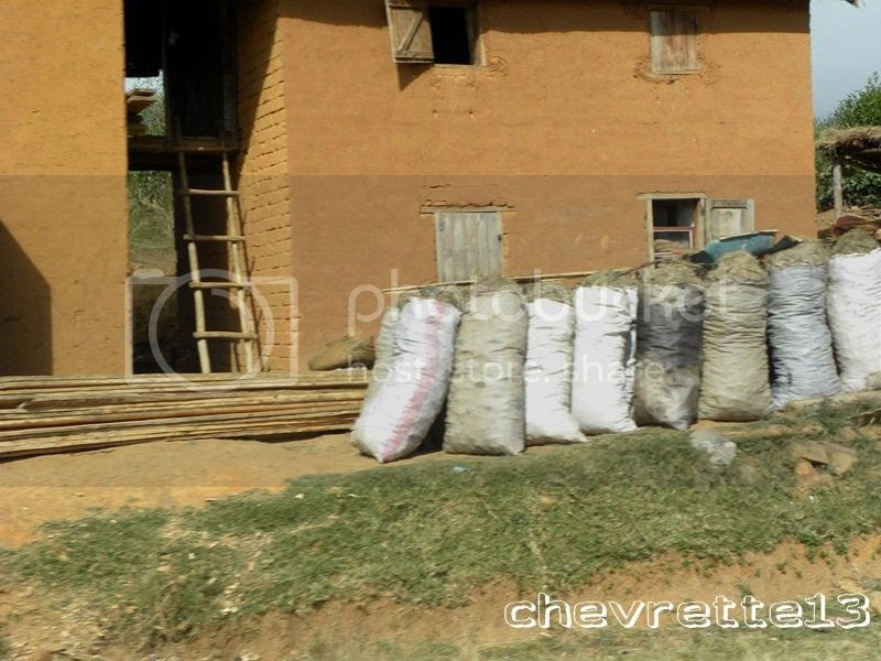 http://i1252.photobucket.com/albums/hh578/chevrette13/Madagascar/DSCN1642Copier_zps9de42082.jpg