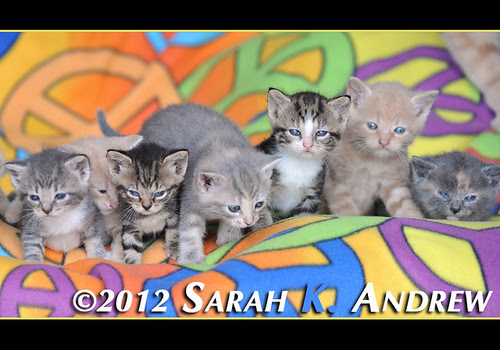 Please call Camelot Auction at 609 448 5225 for more information about the kittens at the barn who are looking for homes.