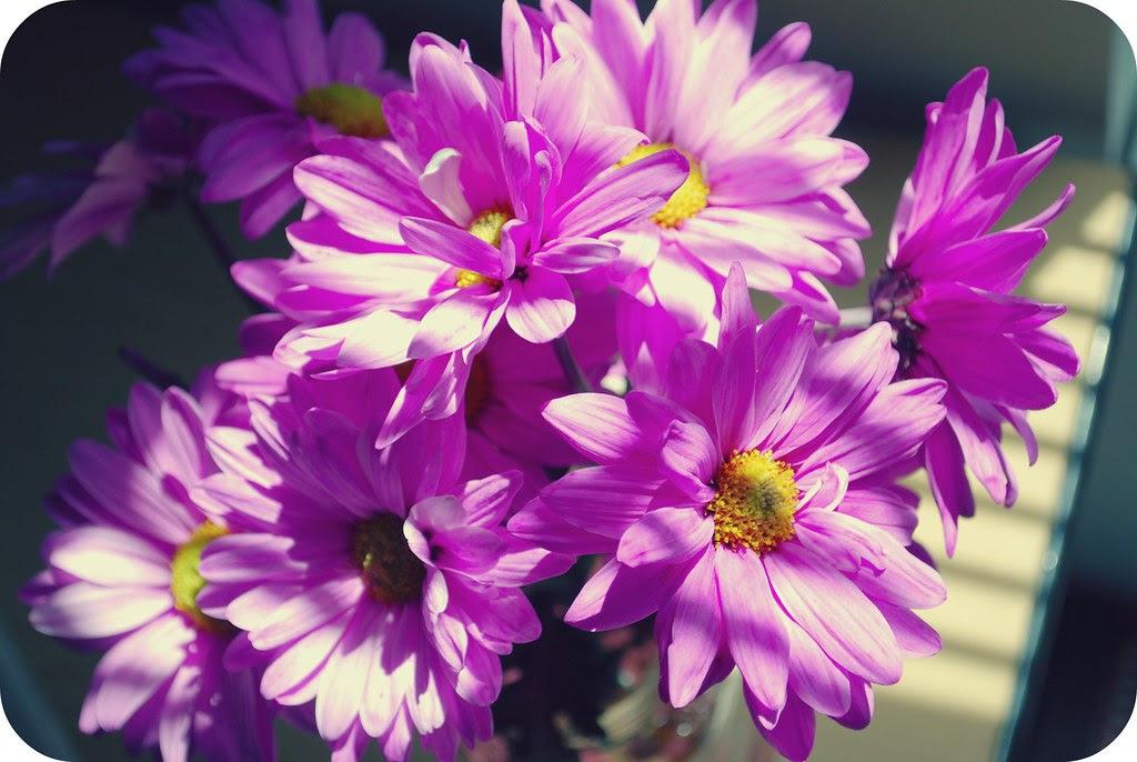 happyflowers2