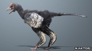 "What may be the earliest creature yet discovered on the evolutionary line to birds has been unearthed in China. The fossil animal, which retains impressions of feathers, is dated to be about 160 million years old. Scientists have given it the name Aurornis, which means ""dawn bird"". The significance of the find, they tell Nature magazine, is that it helps simplify not only our understanding for how birds emerged from dinosaurs but also for how powered flight originated. Aurornis xui, to give it its full name, is preserved in a shale slab pulled from the famous fossil beds of Liaoning Province. About 50cm tail to beak, the animal has very primitive skeletal features that put it right at the base of the avialans - the group that includes birds and their close relatives since the divergence from dinosaurs. (via BBC News - Archaeopteryx restored in fossil reshuffle)"