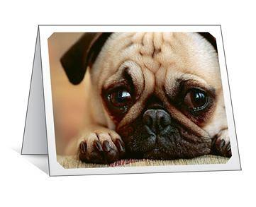 Sad Pug by Megan Lorenz