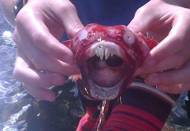Espécime seria um peixe rêmora (Foto: Reprodução/Facebook)